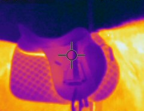 Thermal is used to help check saddle fit on horses